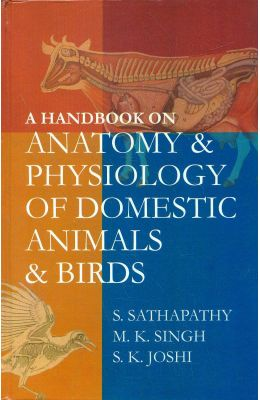 Anatomy of domestic animals